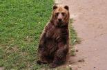 the-bear-539332_1920