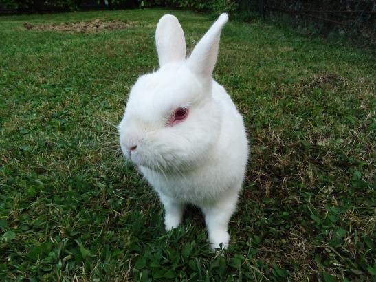 rabbit-1004453_1920