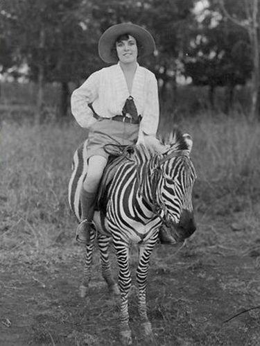 zebrac
