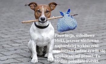 bezdomne-psy